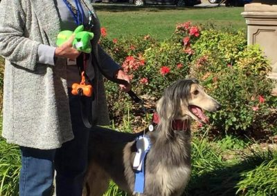 Dog Show 2017 - Best in Show