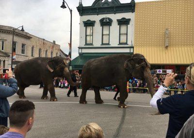 Parade 2016 - Zerbini Circus Elephants